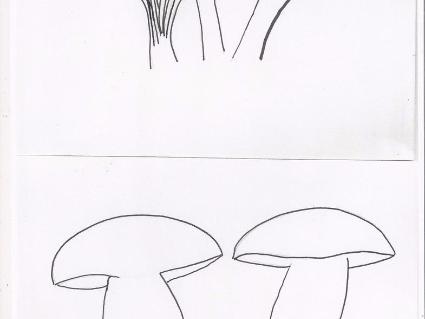 coloriage: les champignons
