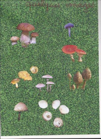 image de champignons